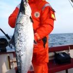 Atlantic Salmon 3-1